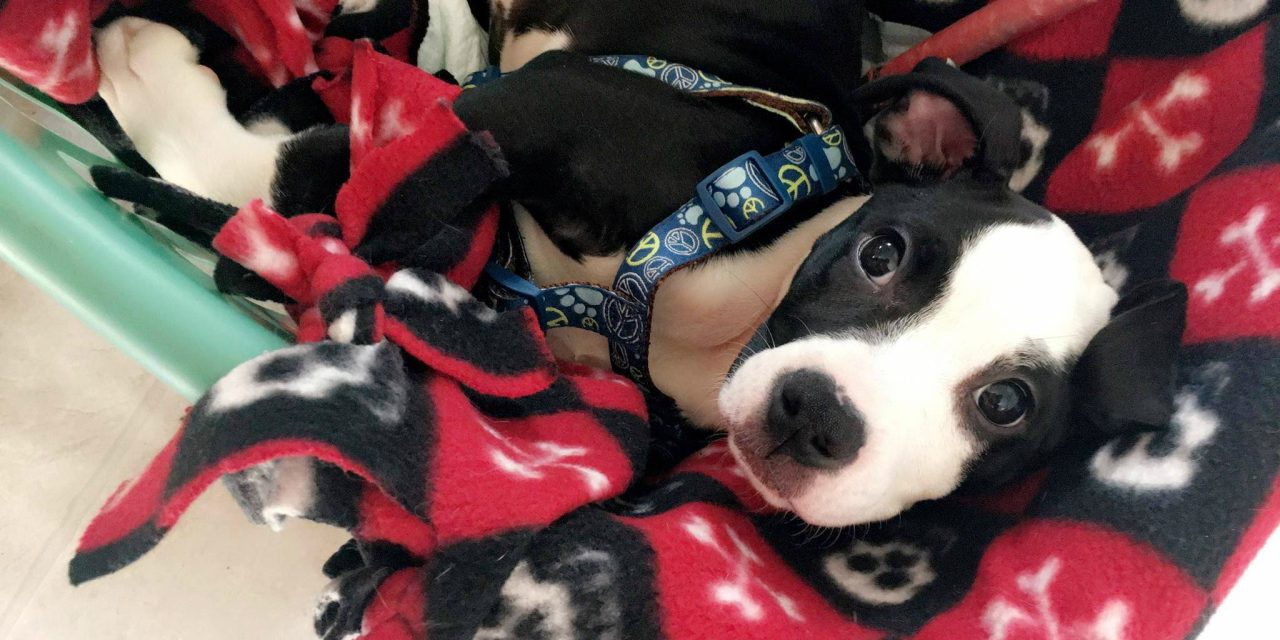 Community supports abandoned, injured dog found in Amsterdam