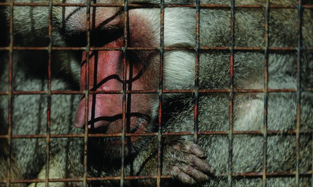 Animals still in cages a year  after Buenos Aires zoo closure