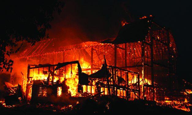 Several animals perish in Nelliston barn fire