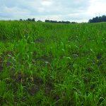 Local farms see crop delays due to rainy season